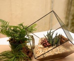 Terariumas augalų